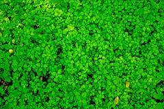 Plantas verdes que crescem o fundo Fotografia de Stock Royalty Free