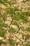 Plantas verdes que crescem o solo inoperante da calha foto de stock royalty free