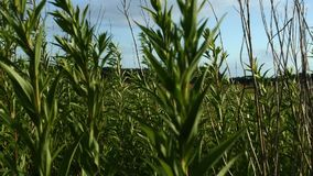 Plantas verdes que movem-se no vento vídeos de arquivo