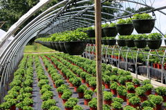 Plantas verdes saudáveis Foto de Stock