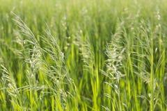 Plantas verdes selvagens no luminoso Imagens de Stock