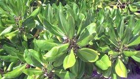 Plantas verdes sob o sol em Maldivas video estoque