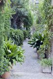 Plantas verdes tropicales entre las casas de piedra en jardín urbano Fotografía de archivo