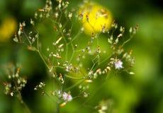 Plantas verdes y brotes de flor Fotografía de archivo