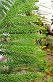 Plantas verdes y caídas del descenso del agua foto de archivo libre de regalías