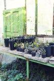Plantas verdes y flores en potes Fotografía de archivo libre de regalías