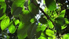 Plantas verdes y ?rboles almacen de video