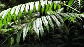 Plantas verdes y ?rboles almacen de metraje de vídeo