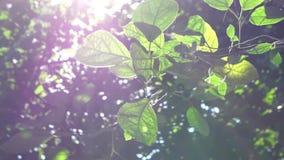 Plantas verdes y ?rboles metrajes