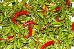 Plantas verdes y rojas de la especia de los chiles Imagen de archivo libre de regalías
