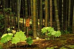 Plantas vibrantes no mato de bambu fotografia de stock