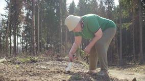 Plantas voluntárias superiores uma árvore filme