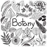 Plantas y árboles de los iconos de la escritura del garabato de la biología de la botánica libre illustration