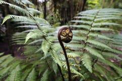Plantas y árboles de naturales de Nueva Zelandia Fotos de archivo