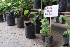 Plantas y árboles vendidos en el mercado de domingo foto de archivo