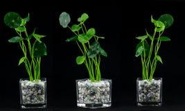 Plantas y elementos de cristal del florero imagen de archivo libre de regalías
