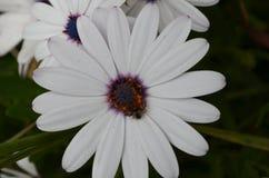 Plantas y flores de Costa Vicentina Natural Park, Portugal al sudoeste imagen de archivo