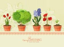 Plantas y flores de la primavera en pote de arcilla en fondo beige Fotos de archivo libres de regalías