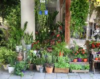 Plantas y flores en potes cerca de la entrada de la floristería Imagen de archivo libre de regalías