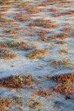 Plantas y fondo de la sal Fotos de archivo
