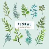 Plantas y hojas botánicas Foto de archivo