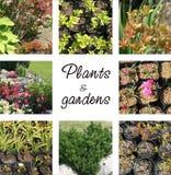 Plantas y jardines Fotografía de archivo libre de regalías