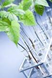 Plantas y laboratorio Foto de archivo libre de regalías