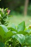 Plantas y lirio de la calabaza fotografía de archivo libre de regalías