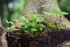 Plantas y madera imagen de archivo