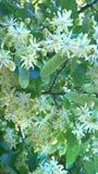 plantas y madera de la naturaleza Foto de archivo libre de regalías
