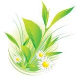 Plantas y manzanilla