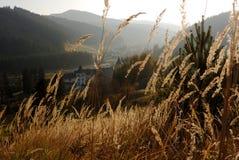 Plantas y monasterio de oro Imagen de archivo libre de regalías