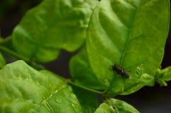 Plantas y moscas Imagen de archivo