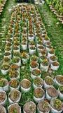 Plantas y naturaleza grandes hermosas del fondo del jardín del árbol foto de archivo
