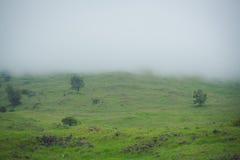 Plantas y prados hermosos de Misty Landscape Imagenes de archivo