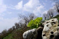 Plantas y rocas Fotografía de archivo libre de regalías