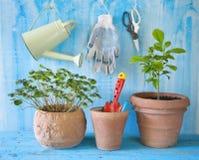 Plantas y utensilios que cultivan un huerto Foto de archivo
