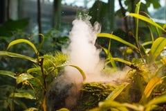 Plantas y vapor mojados en invernadero tropical Imagenes de archivo