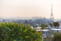 Plantas y vegetación en una terraza con la torre Eiffel en un bl Foto de archivo libre de regalías