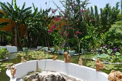 Plantas y verde de la charca del jardín de Asien foto de archivo libre de regalías