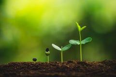 Plantatillväxt som planterar träd som bevattnar ett naturligt ljus för träd arkivbild
