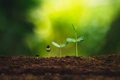 Plantatillväxt som planterar träd som bevattnar ett naturligt ljus för träd royaltyfria bilder