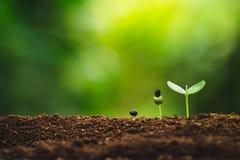 Plantatillväxt som planterar träd som bevattnar ett naturligt ljus för träd arkivfoto