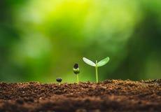 Plantatillväxt som planterar träd som bevattnar ett naturligt ljus för träd royaltyfri fotografi