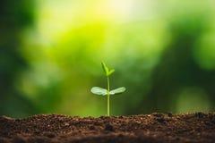 Plantatillväxt som planterar träd som bevattnar ett naturligt ljus för träd royaltyfri foto