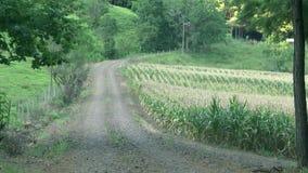 Plantatin del campo de maíz verde almacen de video