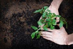 Plantation photographie stock libre de droits