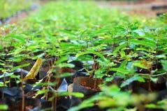 Plantation Royalty Free Stock Photos