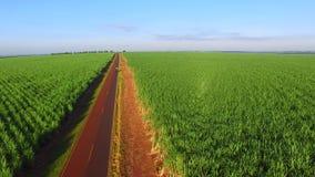 Plantation aérienne de soja et de canne à sucre avec la machine dans la route dans l'état de Sao Paulo - Brésil clips vidéos