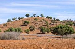 Plantation of argan trees, Morocco Stock Photo